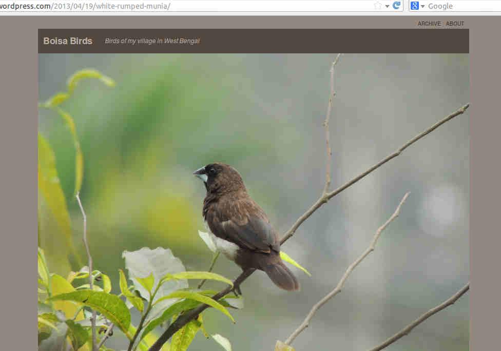 boisa-website