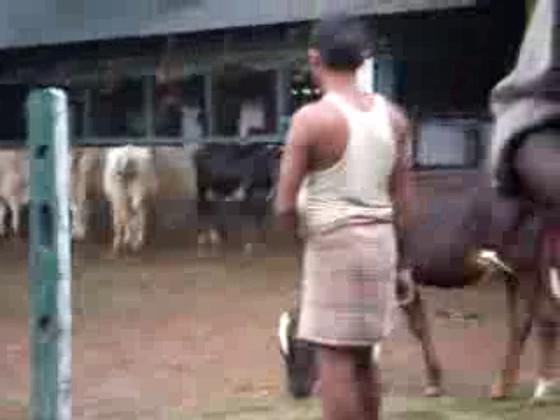 শ্রী দার্জিলিং শিলিগুড়ি গোশালা