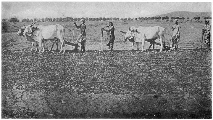 চাষভিত্তিক কুর্মী সম্প্রদায়ের ছবি উইকিপিডিয়া থেকে।