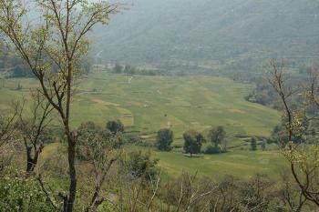 malethas-field