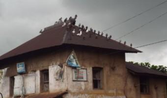 জঙ্গলমহলের ডায়েরি : সোনামুখীর দিকে