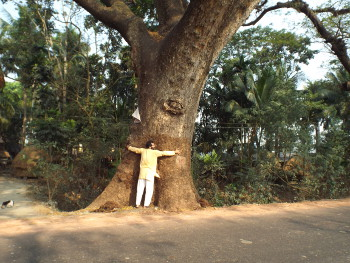যশোর রোডে। ১৩ ফেব্রুয়ারি। বঙ্কিম।