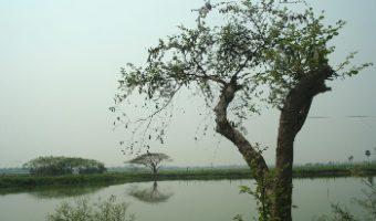 হাইকোর্টের স্থগিতাদেশে আপাতত থমকে হিন্দমোটরের বিশালাকার জলাভূমি ভরাট
