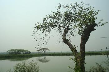 ২০০৯ এর ফাইলচিত্রে হিন্দমোটরের জলাভূমি। ছবি কুণাল ঠাকুরের সৌজন্যে পাওয়া।