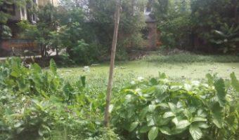 কসবা-হালতু এলাকার বেশ কয়েকটি পুকুর সংস্কারের অভাবে ধুঁকছে, বোজানোর অপেক্ষায়